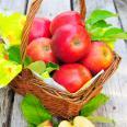 Äpfel im Korb